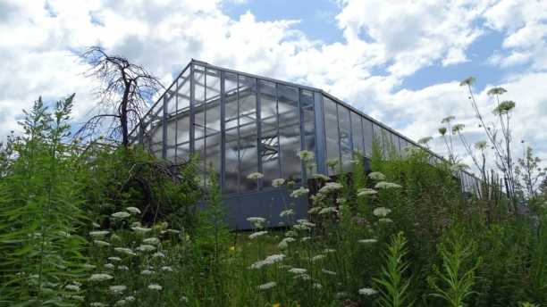 Jeffords Greenhouse
