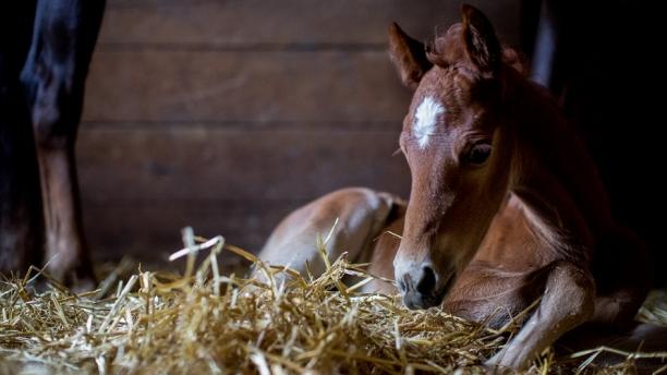 foal in straw