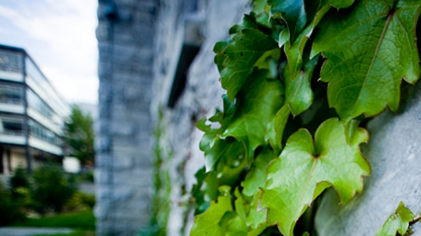 Ivy grows on these walls.
