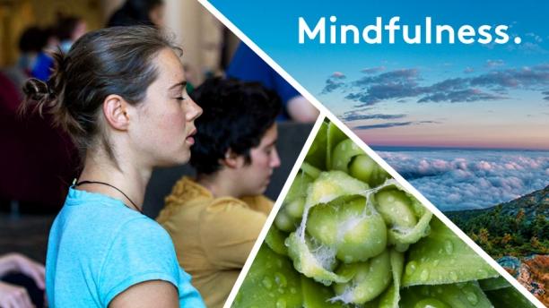 Mindfullness. Meditation. Enjoying nature.