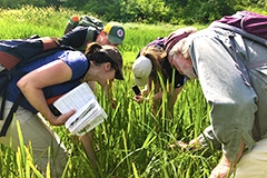 Students and professor identify grasses in a wetland