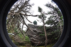 Tree and rock seen through camera lens