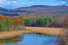 Carse Wetland Natural Area