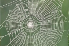 golden spider web