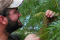 Examining a fern