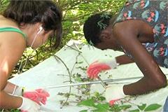 Students examine plant specimens