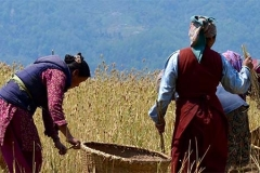 Working in the fields in Nepal