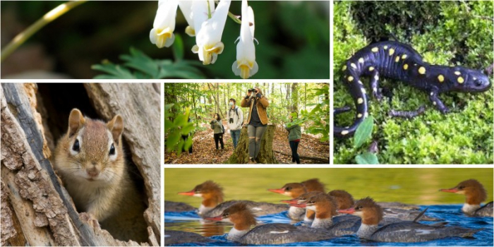 Collage of local plants and animals in spring
