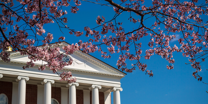 pink blossomed tree in spring in front of Ira Allen Chapel