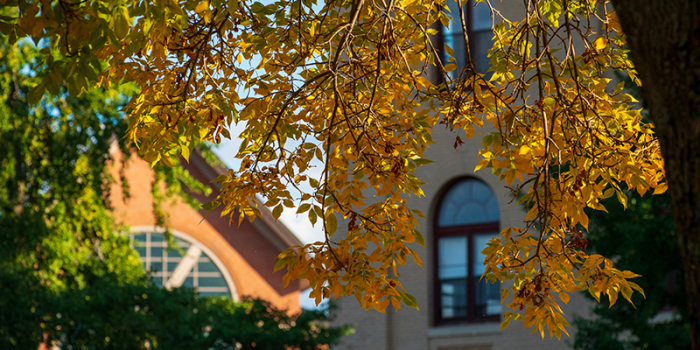 fall leaves agains backdrop of UVM brick building
