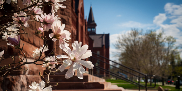 spring blooms on campus green