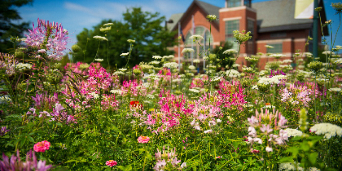 UVM campus in the spring with flowers blooming