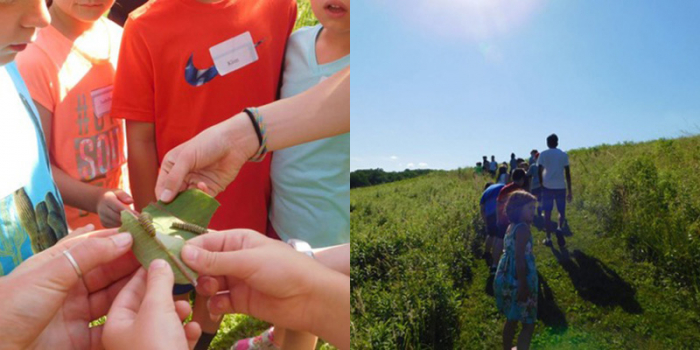 Hands holding a leaf with Monarch butterfly larvae and children walking in a field