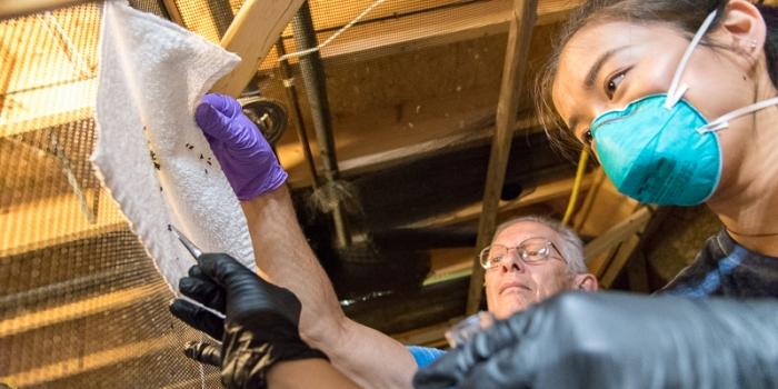 Suma Lashof collects bat scat