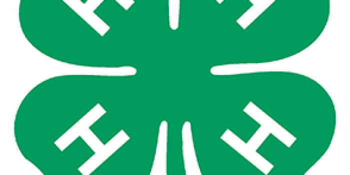 4-H clover national logo