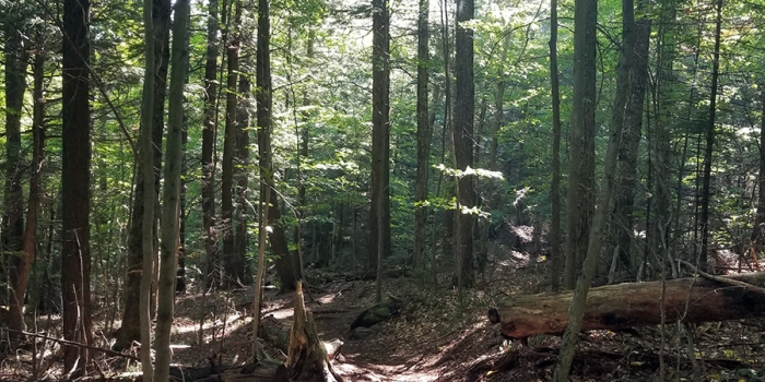 Forest with sunlight coming through the canopy