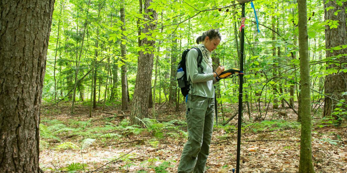 Olivia Lopez uses GPS equipment to locate a plot in the woods of the UVM Jericho Research Forest