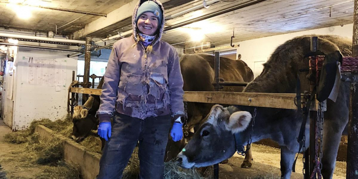 image description: woman with a purple coat, standing in barn with cows and smiling towards camera