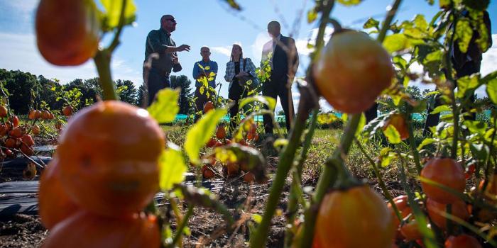 Photo of USDA officials visiting UVM Hort Farm