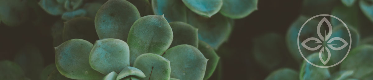 image shows a succulent leaf with an icon of a leaf in the far right