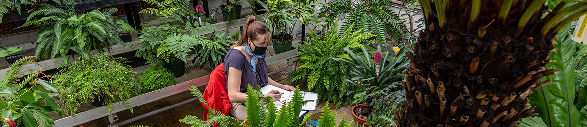 student working in UVM Greenhouse