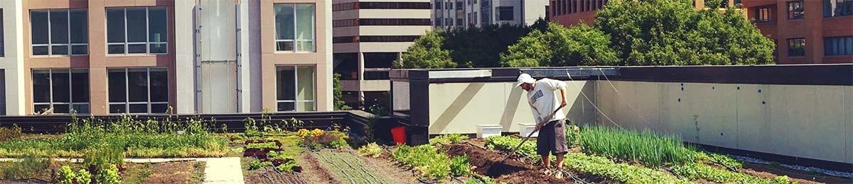 Alumni students working farm plot on a building roof