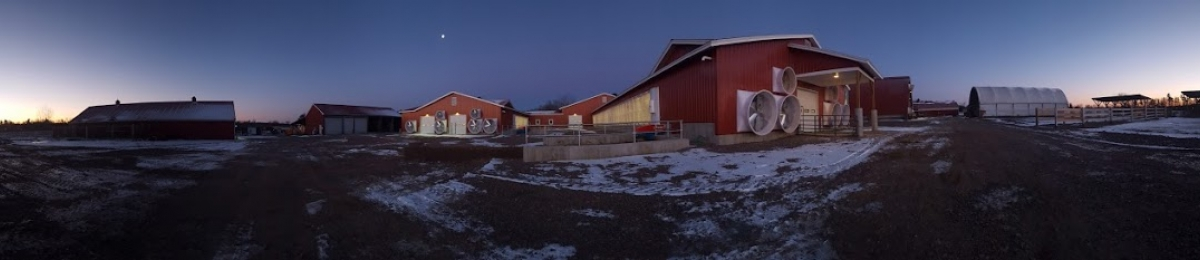 panoramic image of Miller farm barns at sunrise in winter