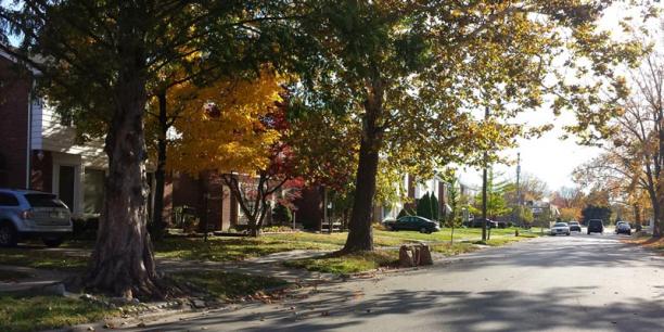 A tree lined street in Detroit, MI.