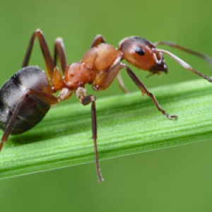 Photo of an ant on a leaf