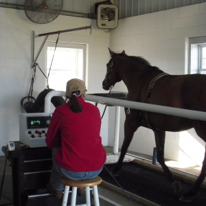 Veterinarian working with a horse on a treadmill