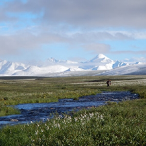 Alaska tundra and mountains