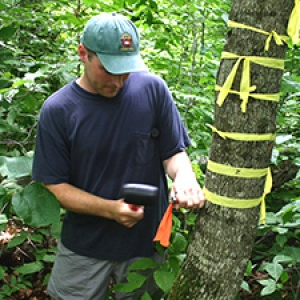 Graduate student conducting research in forest