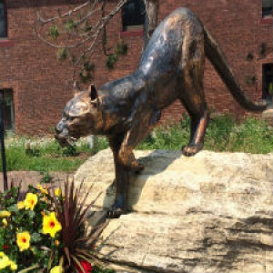 Photo of catamount statue