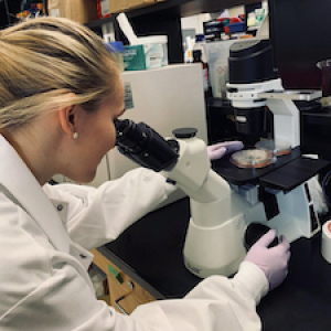 student looking specimen under microscope