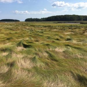 a green salt marsh stretching to the horizon