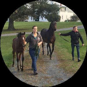 students walking foals at the Morgan horse farm