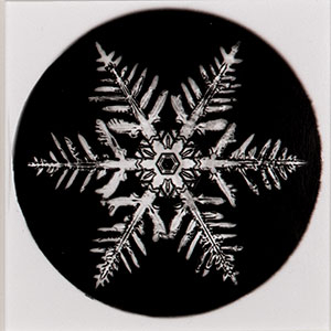 Snowflake print by Wilson A. Bentley