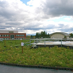 Aiken green roof