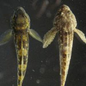 Two small fish