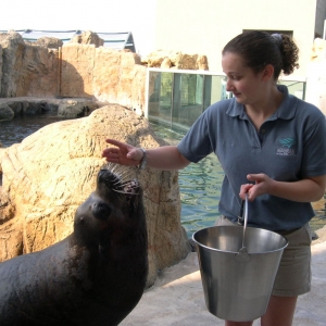 Student feeding a sea lion