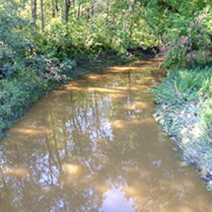 Muddy stream in woods