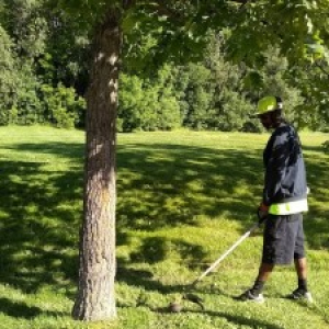 working trimming trees