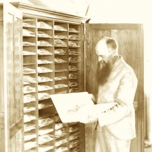 Cyrus Pringle looking in an herbarium cabinet of specimens