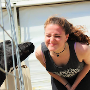 student and cow