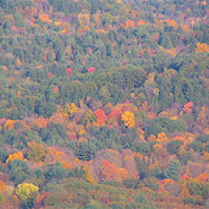 Mixed forest in the fall
