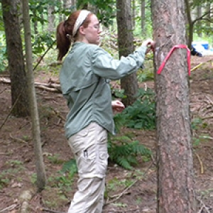 Student conducting tree research
