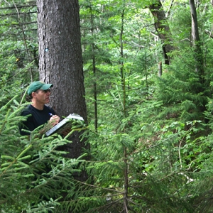 Researcher in forest with clipboard