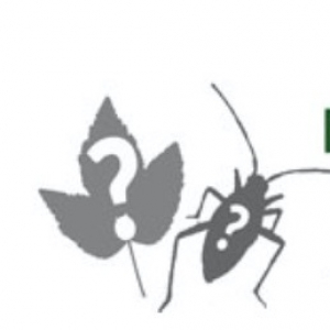 Unsure what a plant or insect is?