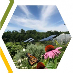 image description: echinacea flowers in a solar field under a blue sky