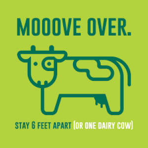 move over cow poster